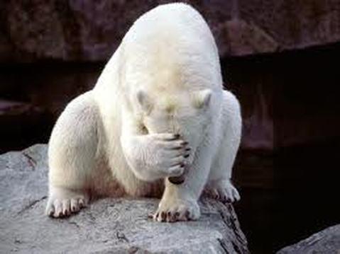 shameful_bear